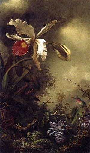 Martin Johnson Heade - White Orchid And Hummingbird