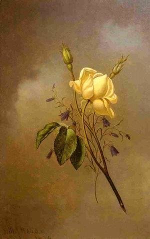Martin Johnson Heade - White Rose Against A Cloudy Sky