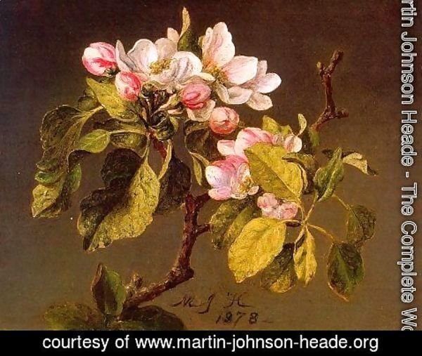 Martin Johnson Heade - Apple Blossoms